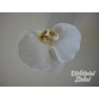 Orchidėjos žiedas G9110