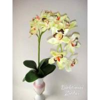 Orchidėjos šaka su rudu G1423