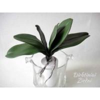 G1473 Orchidėjų lapai 5 l. 26 cm