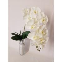 G1422 Orchidėjos šaka. 1 m