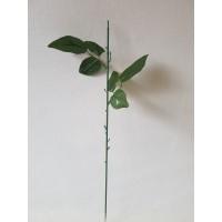 Rožės kotas 47 cm., G1818