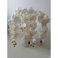 Orchidėjos šaka balta sp., G1792