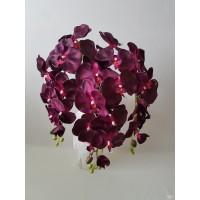 Orchidėjos šaka bordo sp., G1792