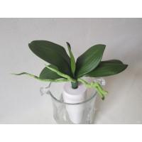 Orchidėjų lapai  maži G55441