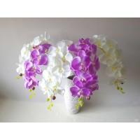 Orchidėjos šaka G1694