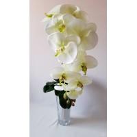 Orchidėjos šaka šilkinė dideliais žiedais, 1 m. žalsva sp., G1878