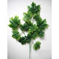 Klevo lapų šaka žalia sp., G1691