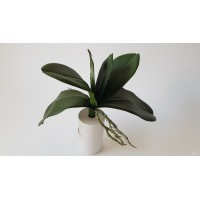 Orchidėjų lapai G2056