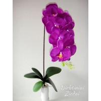 Orchidėjos šaka tamsiai violetinė, G1694