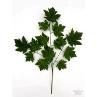 Klevo lapų šaka žalia sp., G2329