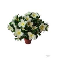 Azalijų vazonėlis balta sp., G1426