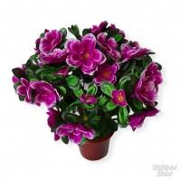 Azalijų vazonėlis  violetinė., G1426