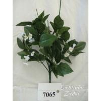 Kotas rožių 12 šakų G7065